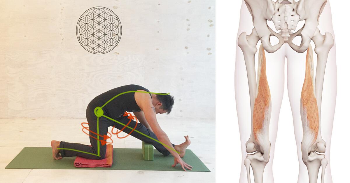 8 Yoga übungen Gegen Verkürzte Muskeln In Den Beinen Hamstrings