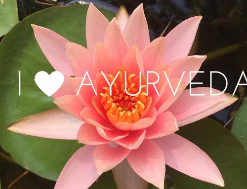 Reisetagebuch Teil 6: Eine persönliche Liebeserklärung an Ayurveda in Goa