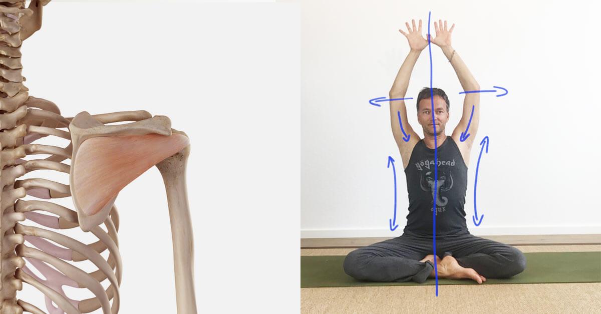 Yoga Übungen schultern und nacken