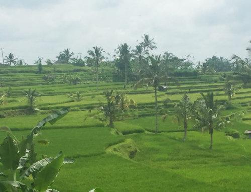 Auszeit Bali. Liebe Grüße von der Insel