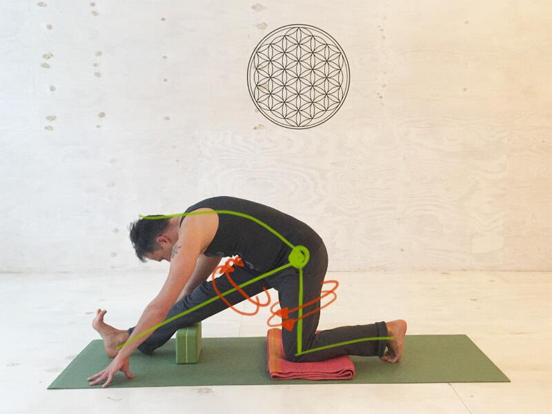 Yoga Übungen Hamstrings