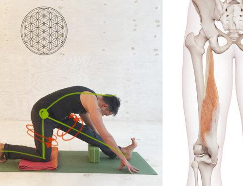 8 Yoga-Übungen gegen verkürzte Hamstrings (Muskulatur in den Beinrückseiten)