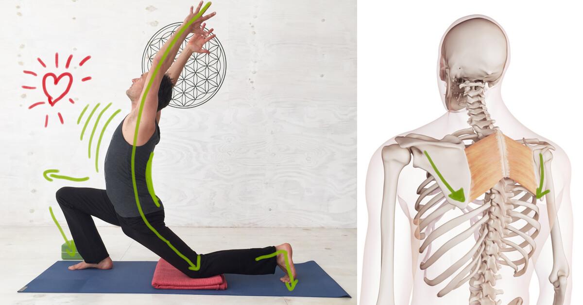Yoga-Übungen - Sequenzen für zu Hause inkl. Anatomie-Grundlagen
