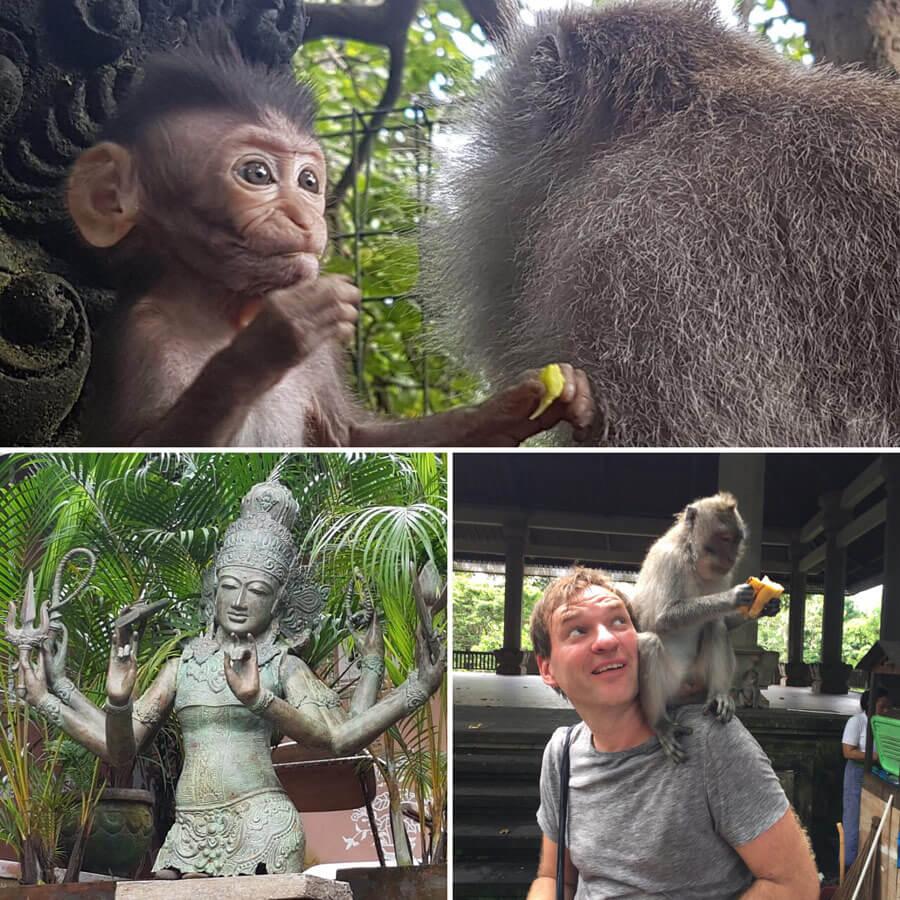 Yogareise Bali - Affenwald