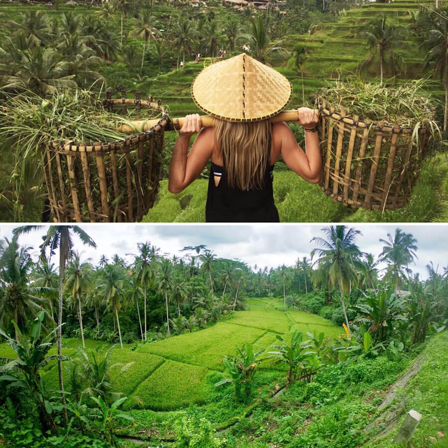 Bali Yogareise - Reisfelder