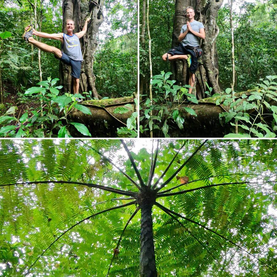 Bali Yogareise - Wanderung im Regenwald