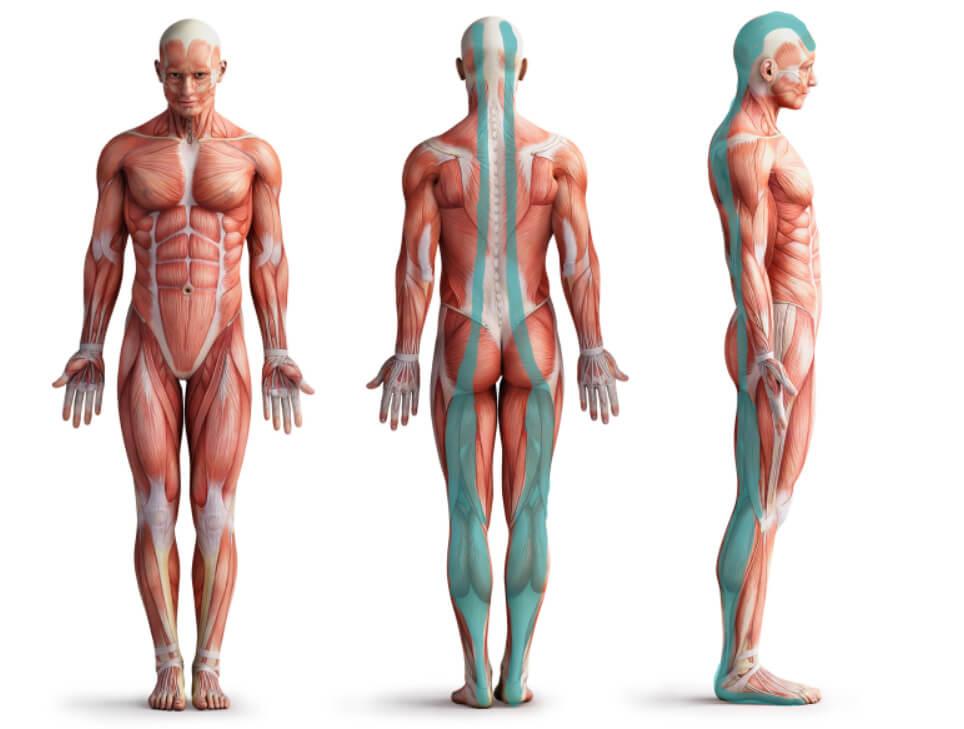 Faszien Yoga - Rücken Linien