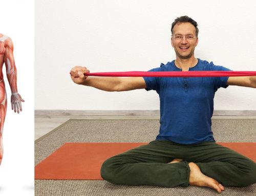 Hatha Yoga Spezial: 4 Grundlagen zum richtigen Muskeln dehnen
