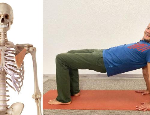 Pectoralis major dehnen – Yoga Übungen gegen Verspannungen in Schulter und Nacken