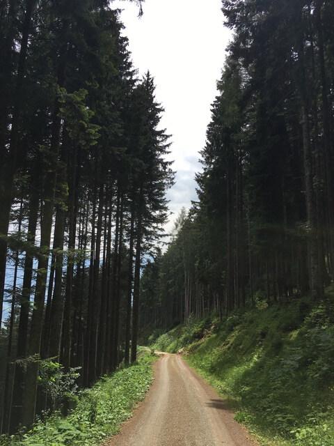 Entspannung Natur Wald